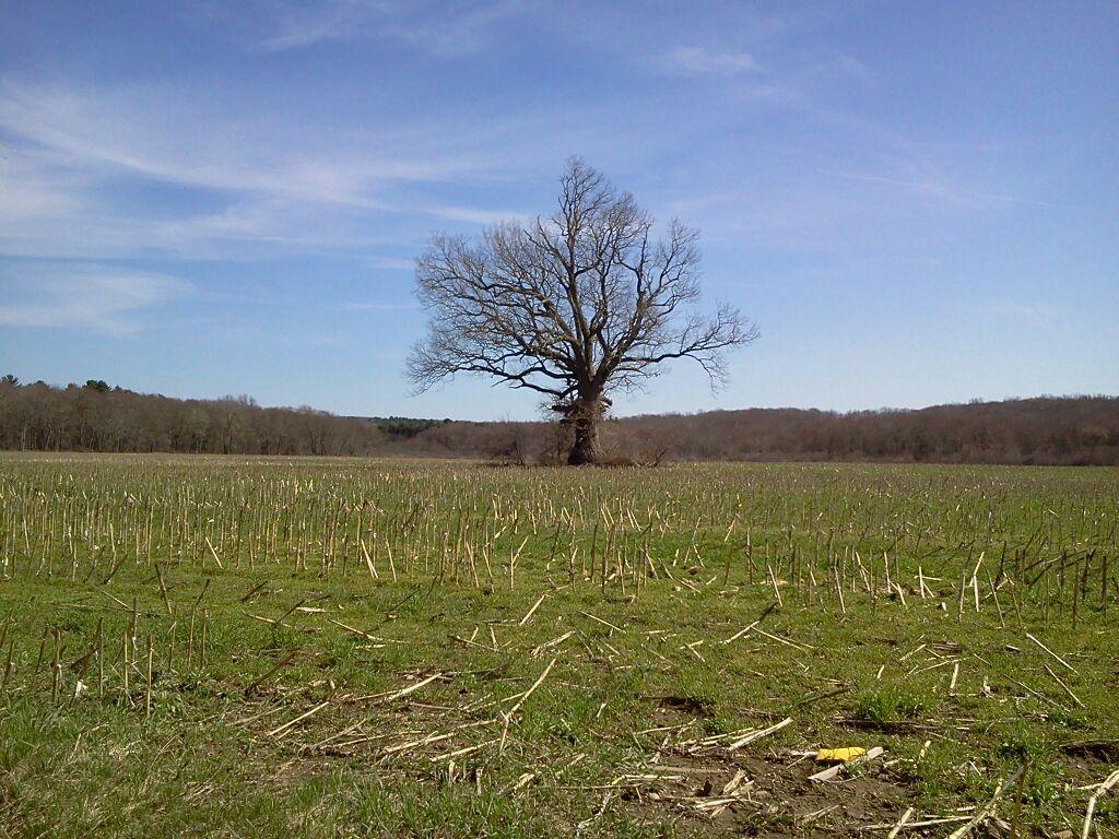 Savin Farm field