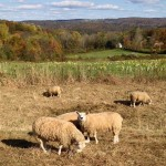 Nominations Open for 2015 Farmland Preservation Pathfinder Awards
